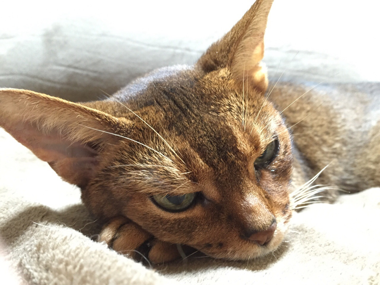 猫 慢性 腎 不全 最期