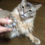 猫が嫌がる爪切りの切り方とコツ。