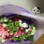 お花と白玉さん。