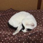 毛布と白玉さん。