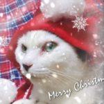ねこまつり クリスマス!!