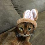 ウサギ姉さん。